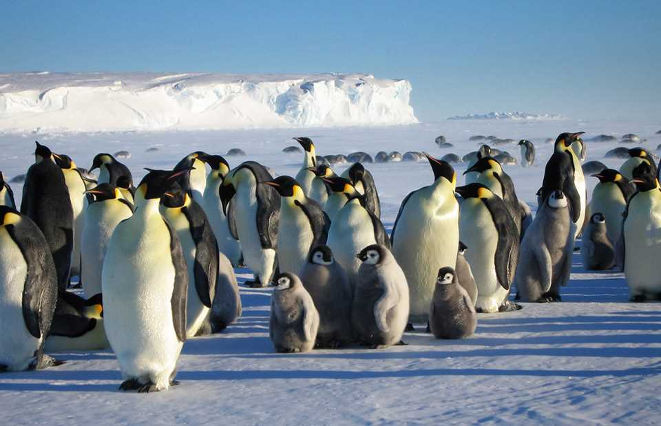 Antarctic Penguin Viewing