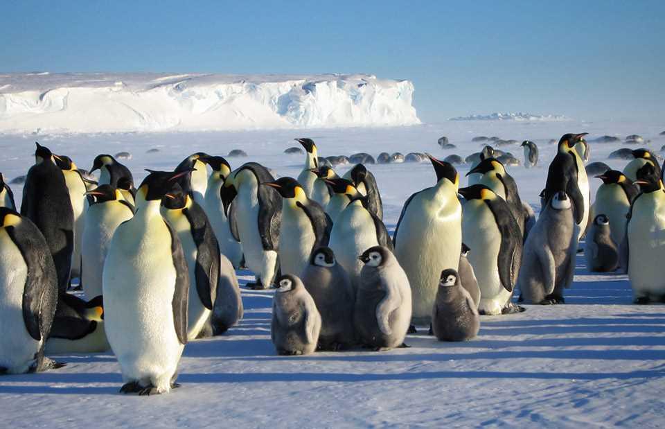 Antarctic Penguin Viewing