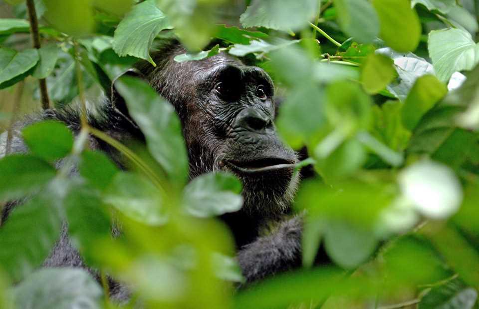 Mahale Mountains Gorilla Safari
