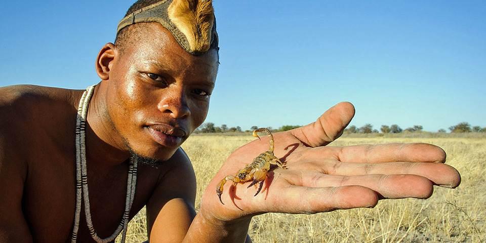 Man holding scorpion in Central Kalahari
