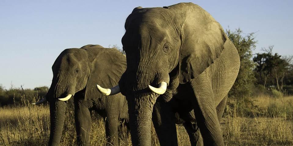 Two elephants at Duma Tau safari camp