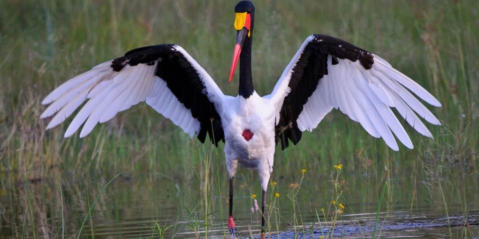 Wading bird in Okavango Delta