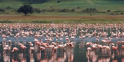 Ngorongoro Crater Lodge Tanzania Safaris Mirus Journeys