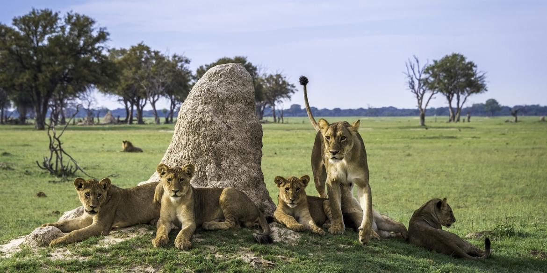 Linkwasha Lions