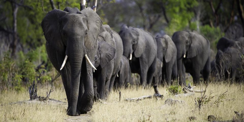 Little Makalolo Elephants