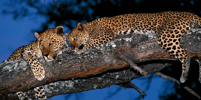 Ruckomechi Leopards