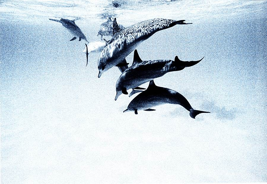 Cocoa luxury island maldives holiday mirus journeys for 1111 dolphin terrace